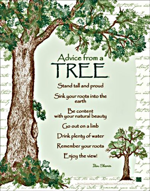 remember your roots   A Project for Kindness