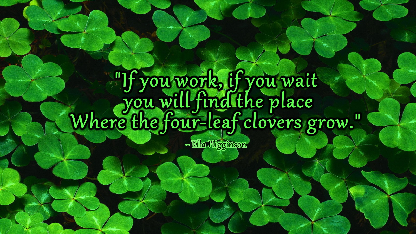 Four Leaf Clover A Project For Kindness