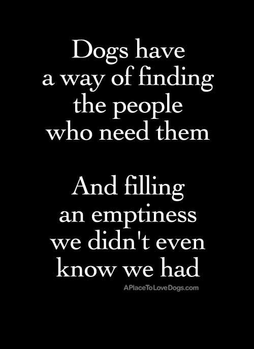 dog fills