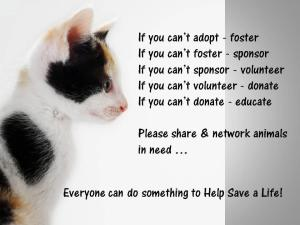 rescue pet