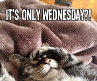 Image result for it is only wednesday