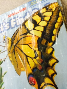 yellow butterfly scholastic
