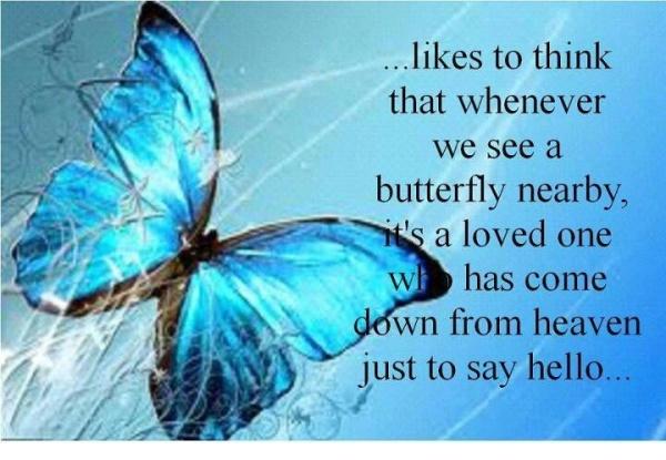 butterfly heaven.jpg
