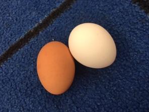 mlk-eggs