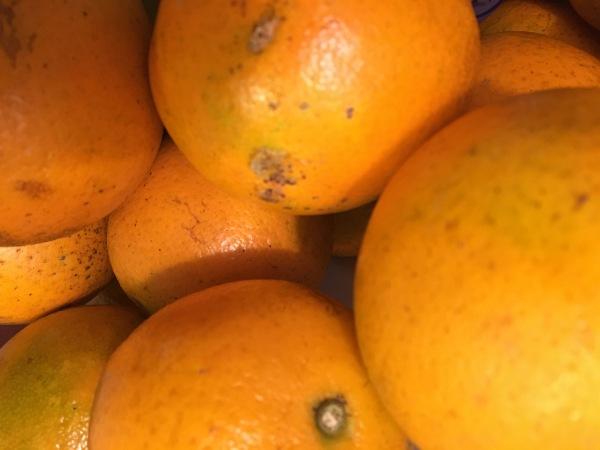 20 fruit.JPG
